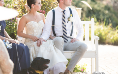 Ways Your Dog Can Take Part in the Big Day