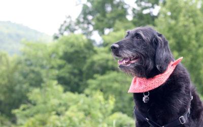 Izzy's Latest Adventure: Kentucky, Tennessee, North Carolina & South Carolina