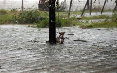 Help us Help Hurricane Harvey Dogs