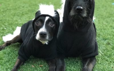 Easy DIY Dog Halloween Costume – Stinky Skunks!