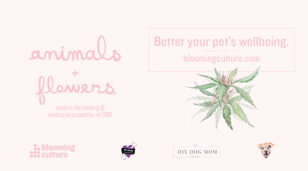 6/7 Blooming Culture CBD Launch Party in Chicago, IL