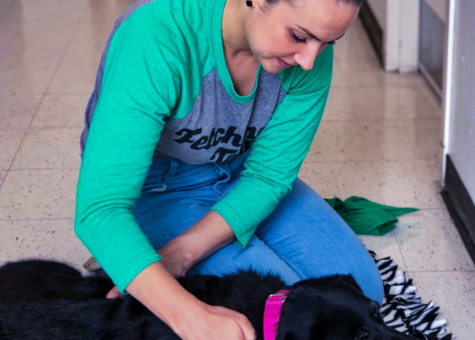 Mini Massage Sessions at Page's Healthy Paws, Lake Zurich, IL 1/13 & 1/27