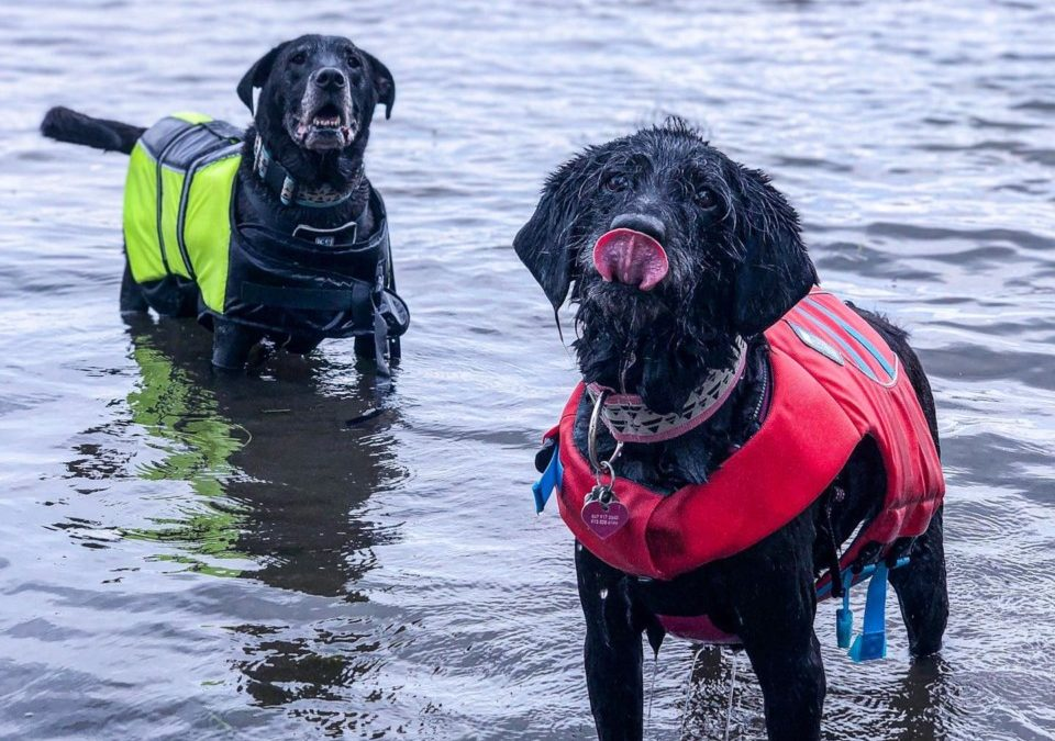 Three Reasons I Love Swimming as My Dog's Exercise + the Best Dog Life Jacket
