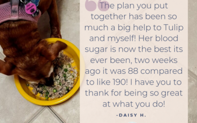 Testimonial: Tulip's Diabetic Dog Diet