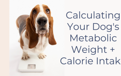 How to Calculate Your Dog's Metabolic Weight + Calorie Intake
