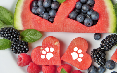 Heart Healthy Foods for Dogs