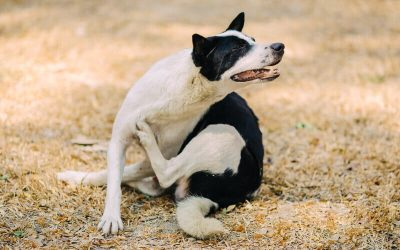 How to Do an Elimination Food Trial for Allergy Dogs – Elimination Diet